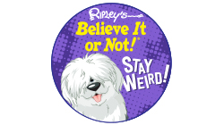 Ripley's Believe it or Not! Custom Temporary Tattoo